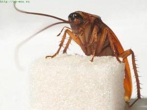 Уничтожение тараканов пос. Воровского