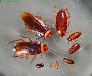 Уничтожение тараканов Ново-Переделкино